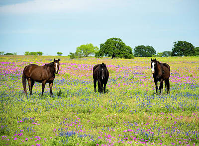 Photograph - Tres Caballos by David Morefield