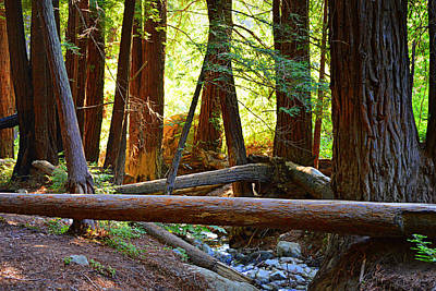Photograph - Triangle Crossing - Big Sur by Glenn McCarthy Art and Photography