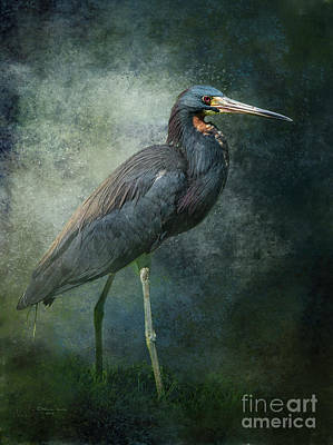 Wildlife Mixed Media - Tricolor Portrait by Marvin Spates