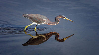 Photograph - Tricolored Reflection by Van Sutherland