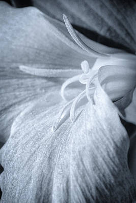 Photograph - Trillium At Dusk by David Heilman