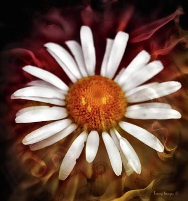 Photograph - Tripping Daisy  by Wesley Nesbitt