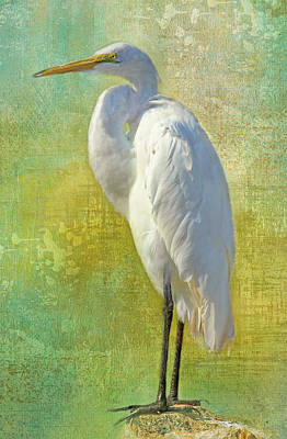 Photograph - Tropical Egret by HH Photography of Florida