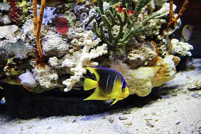 Photograph - Tropical Fish Cutie by Cynthia Guinn
