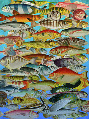 Digital Art - Tropical Fish by Gary Grayson
