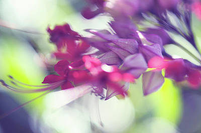 Photograph - Tropical Flowers Abstract Macro by Jenny Rainbow