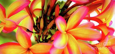 Photograph - Tropical Hawaii Plumeria Flowers by D Davila