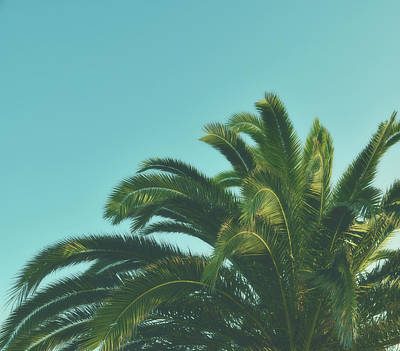 Kristian Gallagher Royalty-Free and Rights-Managed Images - Tropical Palm by Kristian Gallagher