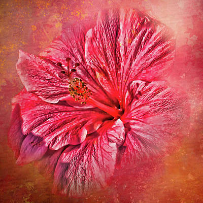 Photograph - Tropical Pink Hibiscus by HH Photography of Florida