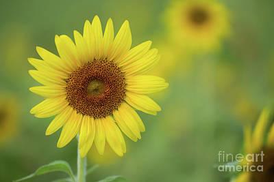 Photograph - Tropical Sunflowers by Sabrina L Ryan