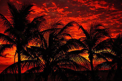 Photograph - Tropical Sunrise by Meta Gatschenberger
