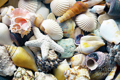 Photograph - Tropical Treasure Seashells B91218 by Mas Art Studio