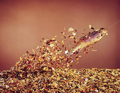 Photograph - Trout Flying Out Of Bed Of Almonds In Pr by John Dominis