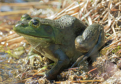 Photograph - True Frog by Sally Sperry