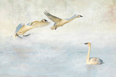Photograph - Trumpeter Swans - Don't Land On Me by Patti Deters