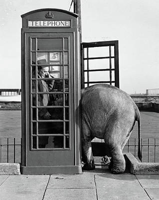 Photograph - Trunk Call by John Drysdale