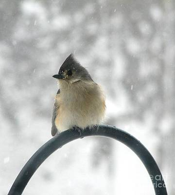 Photograph - Tufted Titmouse In The Snow By Rose Santucisofranko by Rose Santuci-Sofranko