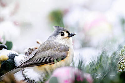 Photograph - Tufted Titmouse Portrait by Christina Rollo