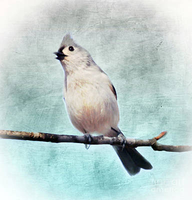Photograph - Tufted Titmouse Sings by Kerri Farley