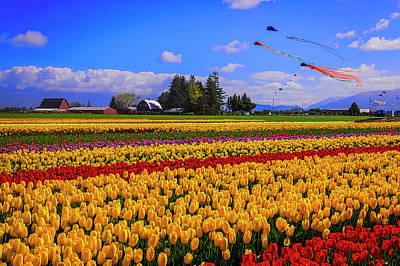 Photograph - Tulip Fields And Kites by Garry Gay