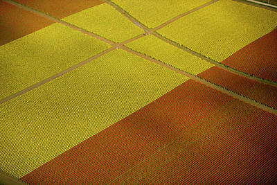 Photograph - Tulip Fields, Skagit Valley, Washington by Mint Images - Art Wolfe