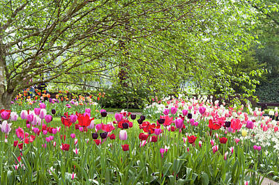 Photograph - Tulip Mix Border In Keukenhof by Jenny Rainbow