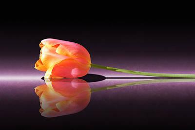 Photograph - Tulip Reflection by Debi Dalio