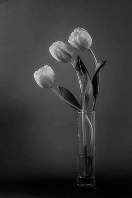 Photograph - Tulips by Cyndy Doty