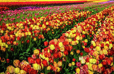 Photograph - Tulips Glorious Tulips by Garry Gay