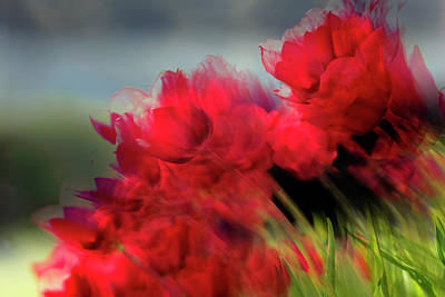 Photograph - Tulips in the Wind by Art Whitton