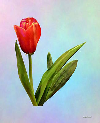 Photograph - Tulips - Single Red Tulip by Susan Savad