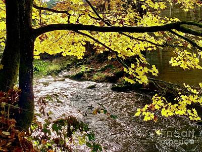 Photograph - Tumwater Creek by Sean Griffin