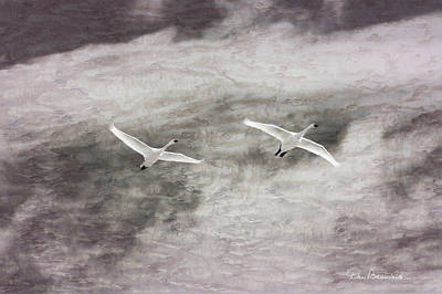 Dan Beauvais Rights Managed Images - Tundra Swans Impression 6752 Royalty-Free Image by Dan Beauvais