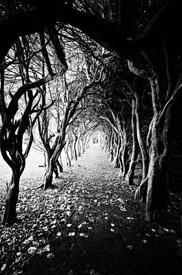 Photograph - Tunnel Of Trees by Michelle Mcmahon