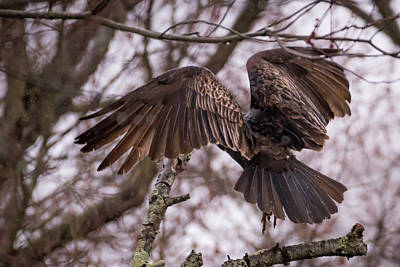 Photograph - Turkey Vulture Wings Taking Off In The Rain by Terry DeLuco