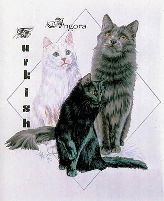 Drawing - Turkish Angora by Barbara Keith