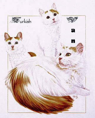 Drawing - Turkish Van by Barbara Keith
