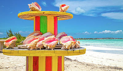 Royalty-Free and Rights-Managed Images - Turks and Caicos Conchs on a Spool by Betsy Knapp