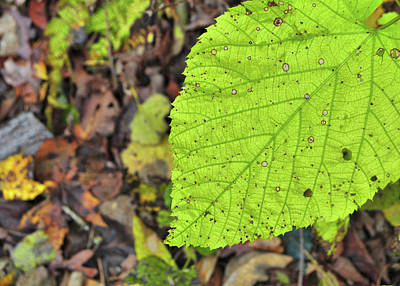 Photograph - Turning Leaf by JAMART Photography
