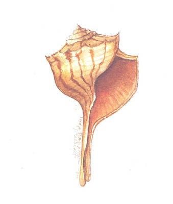 Wall Art - Painting - Turnip Whelk Shell by Carolyn Shores Wright