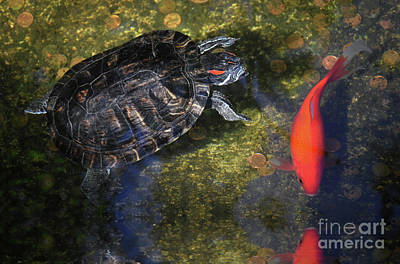 Photograph - Turtle And Koi  by Elaine Manley