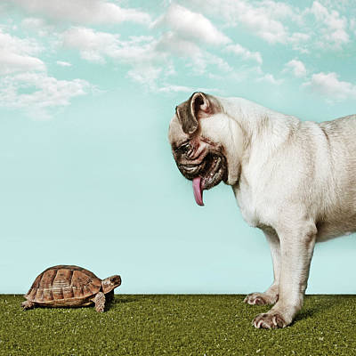 Photograph - Turtle And Pug by Retales Botijero