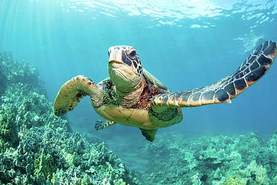 Photograph - Turtle by M Swiet Productions