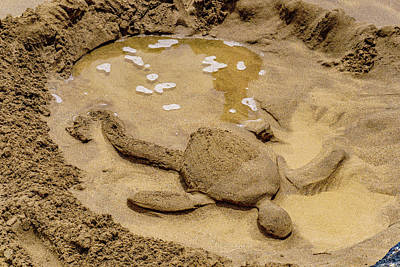 Photograph - Turtle Resting by John Bauer