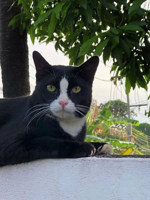 Photograph - Tuxedo Pride by The Happy Cat