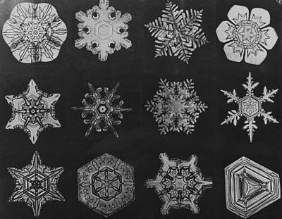 Twelve Snow Crystals Art Print by Herbert