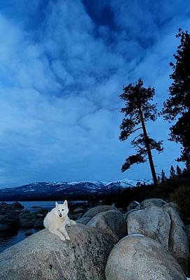 Photograph - Twilight Blues by Sean Sarsfield