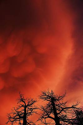 Photograph - Twilight Mammatus by Sean Sarsfield