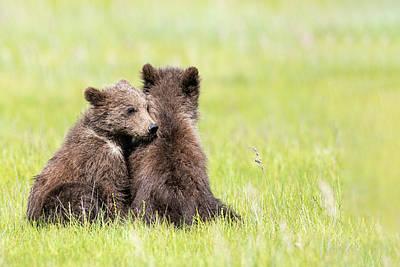 Photograph - Twin Cubs Cuddling by Mark Harrington