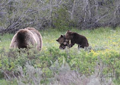 Wall Art - Photograph - Twin Grizzly Cubs by Don Small Jr